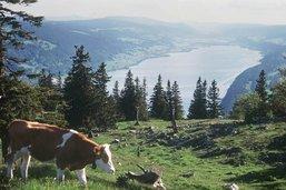 Vaud: l'opération d'approvisionnement en eau se met en place