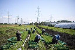 Initiatives agricoles soutenues par une majorité de votants