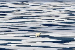 Un chasseur inuit tué dans l'Arctique par un ours polaire