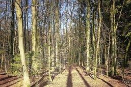 Forêts unies au-delà de la frontière