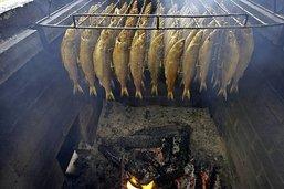 La bondelle, le pain du pêcheur