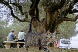 Chacun cherche son chat avec un GPS