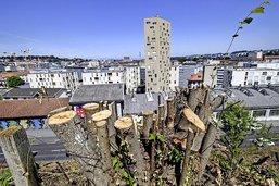 Toujours moins d'arbres à Fribourg
