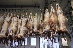 Moudon: agrandissement des abattoirs à l'enquête