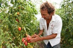 Bienvenue à la ferme des 1001 tomates