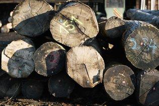 La récolte de bois a augmenté en 2017