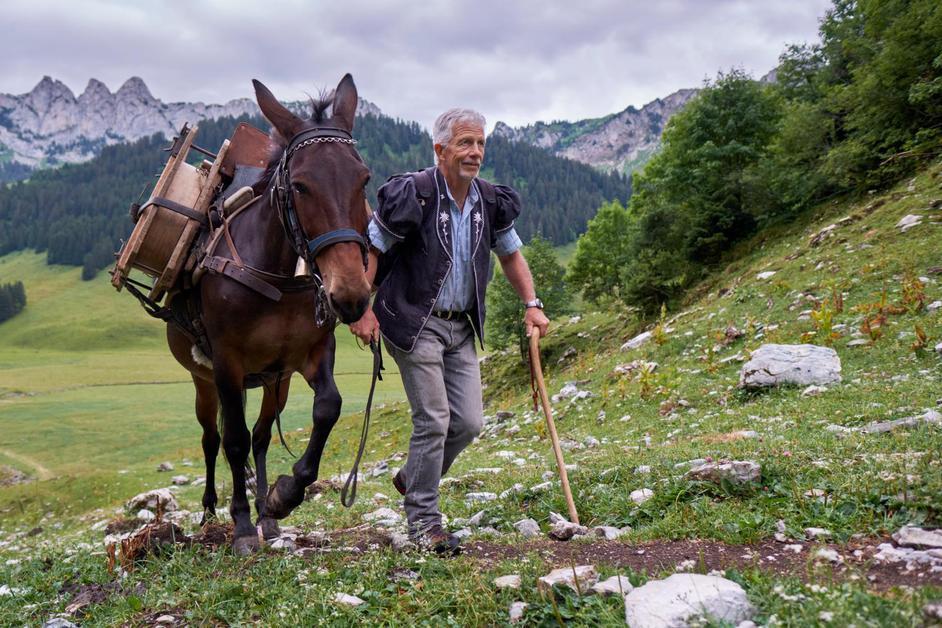 Du transport de fromage à dos de mulet