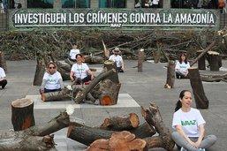 Un cimetière d'arbres en plein Bogota contre la déforestation