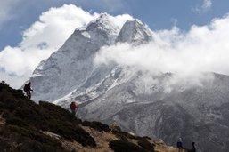 "La cueillette du ""Viagra de l'Himalaya"" se complique"
