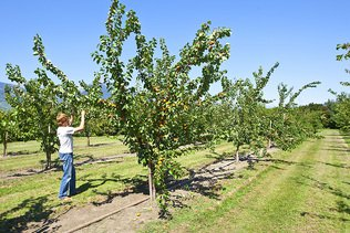 L'agriculture valaisanne sera plus respectueuse de l'environnement