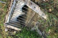 Plusieurs poissons meurent, victimes d'une pollution du Tiguelet