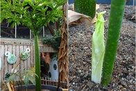 L'Arum-titan du Papiliorama crée la surprise
