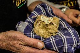 Italie: une truffe blanche d'Alba vendue 85'000 euros