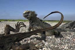 Galapagos: feux du Nouvel An interdits pour protéger les animaux