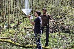 Ils cherchent la petite bête en forêt