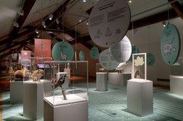 Plus de 65'000 visiteurs au Musée d'histoire naturelle