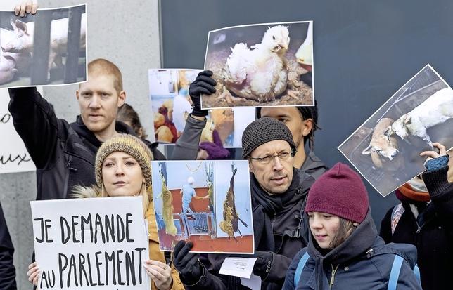 Les manifestations de l'association Pour l'égalité animale exigent une autorisation, mais pas la simple distribution de tracts.  © Keystone-archives