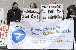 Abattoir de Martigny dans le collimateur de l'association PEA