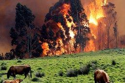Nombreux feux dans le Nord espagnol à cause de températures élevées