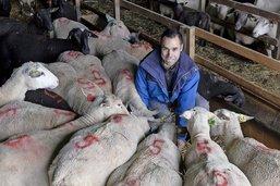 Viticulteur devenu berger