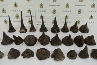 Saisie record de cornes de rhinocéros à Hong Kong