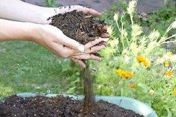 Jardinage: dix gestes pour le climat