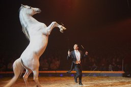 Le cirque Knie fête ses 100 ans à Rapperswil-Jona