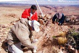 Argentine: cimetière de dinosaures vieux de 220 millions d'années