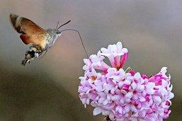 Les insectes tombent comme des mouches