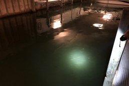 Mystérieuse mort de plus de 1000 poissons à Sugiez