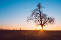 Vie et mort de l'arbre du Torry