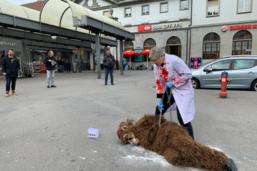 Une action contre l'expérimentation animale