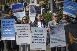 Les antispécistes manifestent contre l'élevage de saumons à Grandvillard