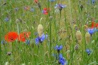 Pro Natura Fribourg agit à l'occasion de la Journée internationale de la biodiversité