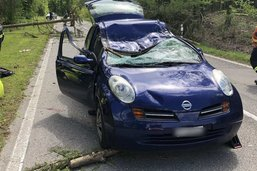 La chute d'un arbre provoque un accident mortel