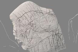 Des gravures d'animaux datant de 12'000 ans découvertes en France