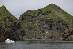 Deux bélugas arrivés de Chine dans un sanctuaire marin en Islande