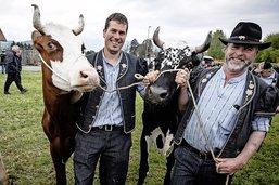 Les armaillis tiennent leurs 40 vaches