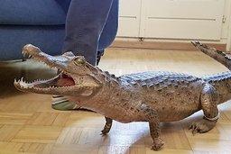 Mon bel Achille, mon crocodile