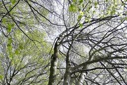 Des arbres qui vous alertent