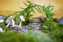 Sur les traces des champignons