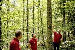 Adapter nos forêts au réchauffement