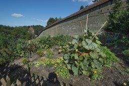 Les sols des jardins familiaux préoccupent
