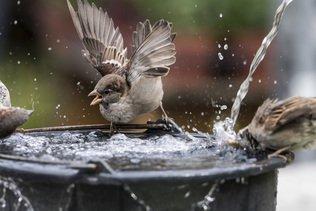 Les oiseaux assez bien outillés pour faire face à la canicule
