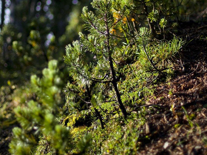 Avec le réchauffement, les arbres meurent plus vite