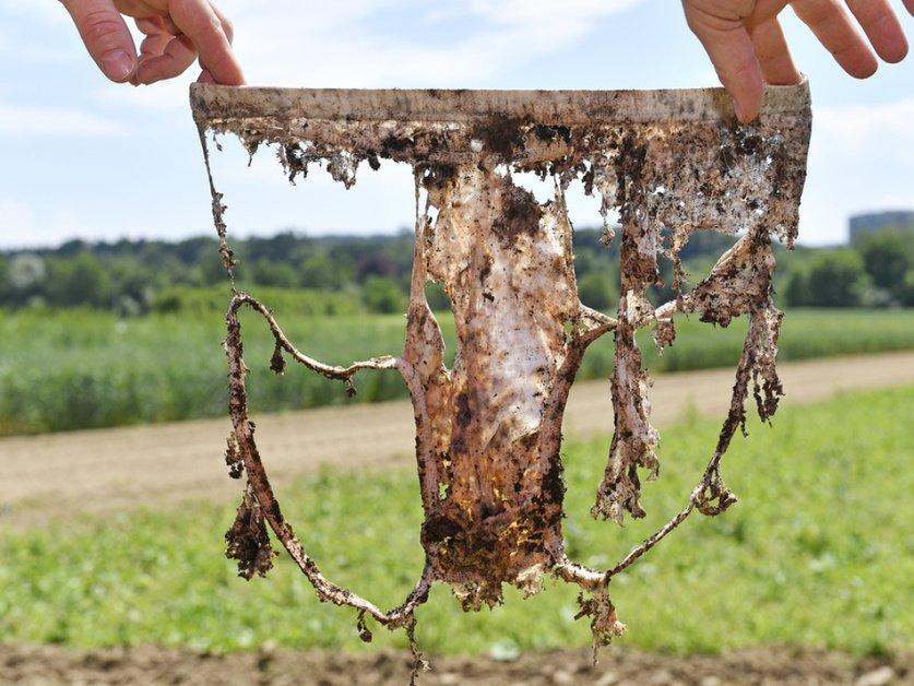 Enterrer des sous-vêtements pour... déterminer la qualité du sol
