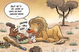 Tous les jours, l'homme condamne un peu plus le lion à mort
