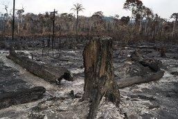 La Colombie veut un pacte régional pour l'Amazonie