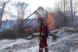 Incendies en Bolivie: déjà trop tard pour de nombreux animaux