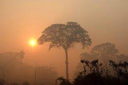 Incendies en Amazonie: les brûlis désormais interdits au Brésil